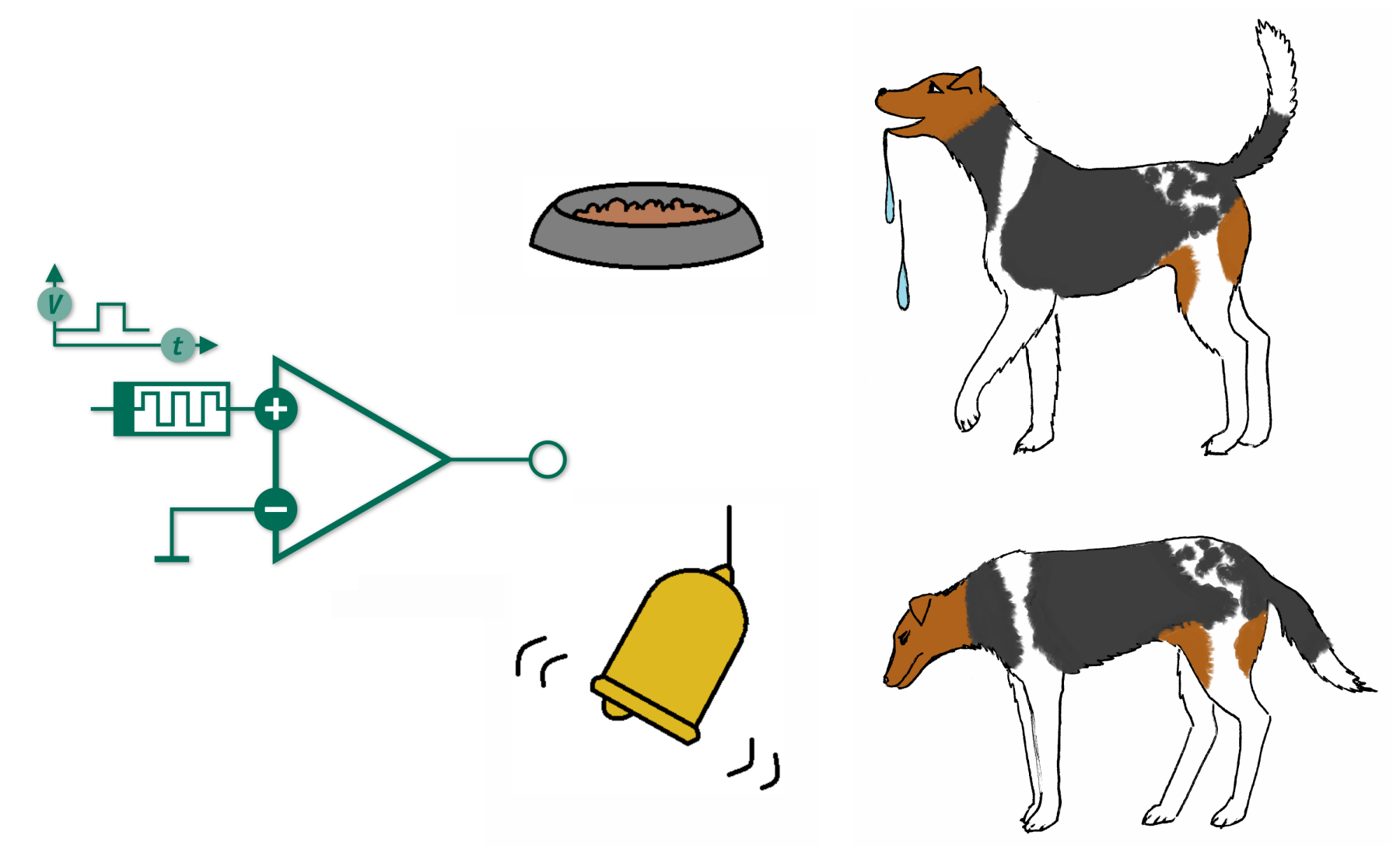 pavlovs dog How did pavlov's dog experiments lead to one of the greatest discoveries in psychology learn more about pavlov's dogs and classical conditioning.