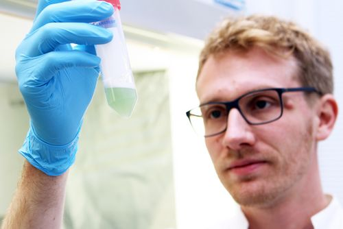 A man observes bacterial cultures in a container