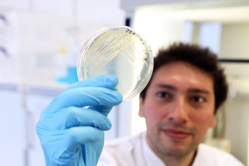 A man demonstrates bacterial growth on an agar plate