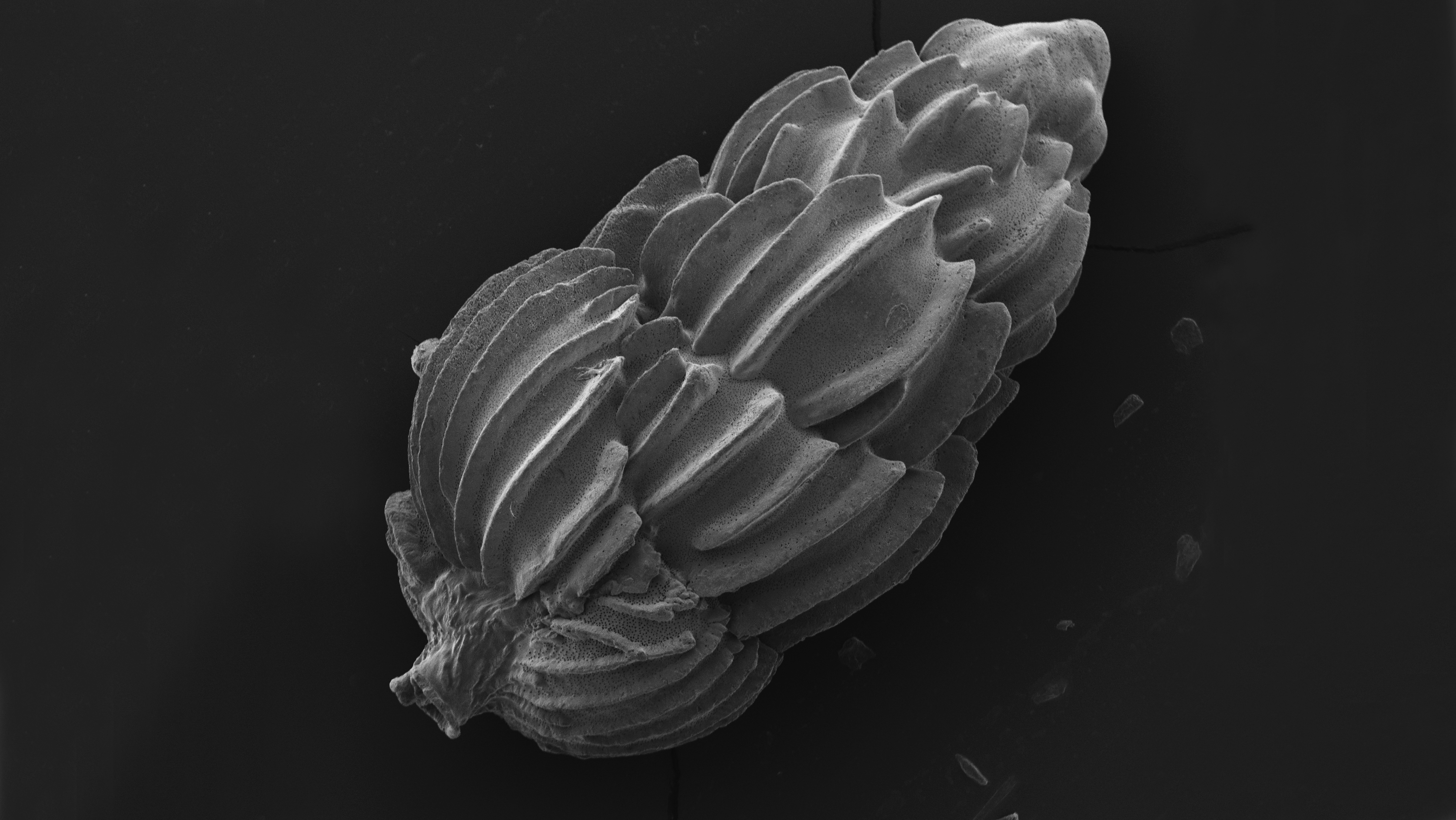 Microscopic image in black and white